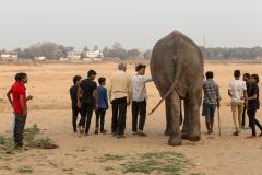 Elefant im Abendrot